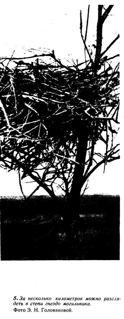 За несколько километров можно разглядеть в степи гнездо могильника