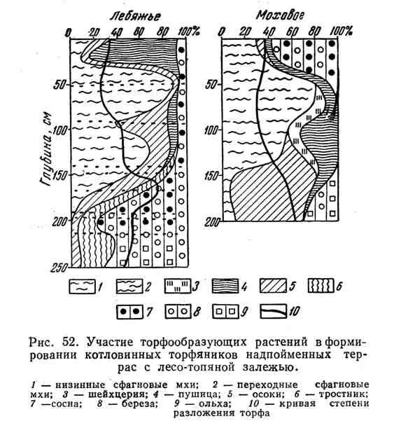 Участие торфообразующих растений в формировании котловинных торфяников надпойменных террас с лесо-топяной залежью