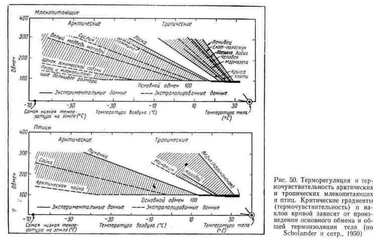 Терморегуляция и термочувствительность арктических и тропических млекопитающих и птиц