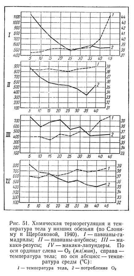 Химическая терморегуляция и температура тела у низших обезьян