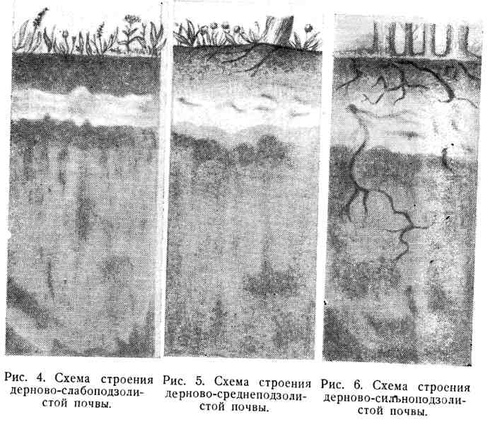 Схемы строения дерново-слабоподзолистой, дерново-среднеподзолистой, дерново-сильноподзолистой почвы