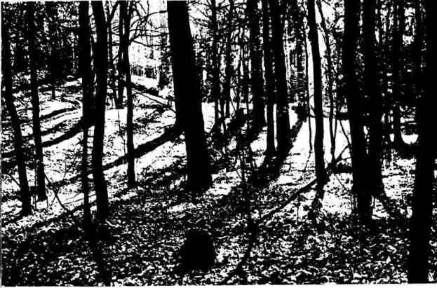 Тихо в осеннем лесу. Каждый выстрел привлечёт дружинников