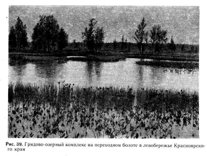 Грядово-озёрный комплекс на переходном болоте в левобережье Красноярского края