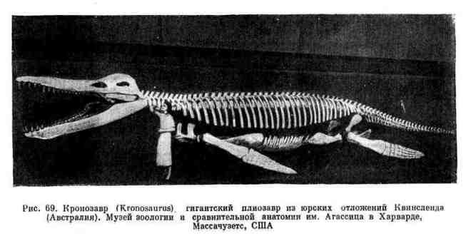 Кроинозавр