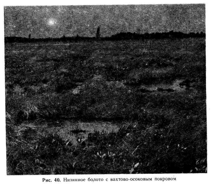 Низинное болото с вахтово-осоковым покровом