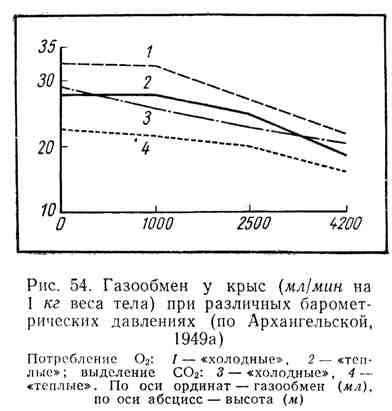 Газообмен у крыс при разных барометрических давлениях