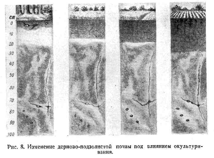 Изменение дерново-подзолистой почвы под влиянием окультуривания