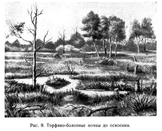 Торфяно-болотные почвы до освоения