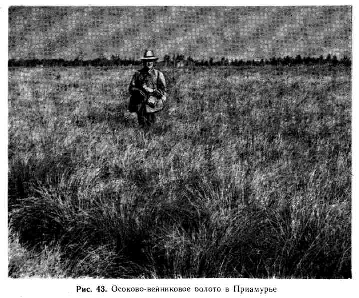 Осоково-вейниковое болото в Приамурье
