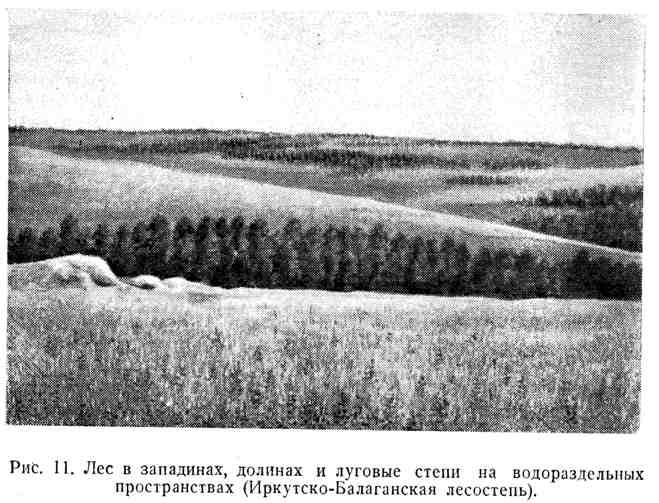 Лес в западинах, долинах и луговые степи на водораздельных пространствах
