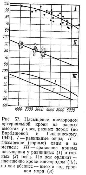 Насыщение кислородом артериальной крови на разных высотах у овец разных пород