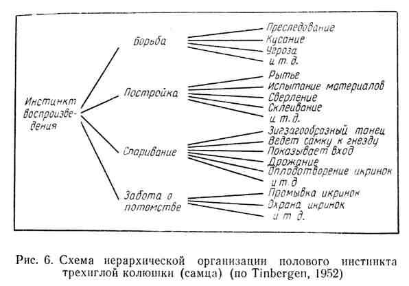 Схема иерархической организации полового инстинкта трёхиглой колюшки (самца)