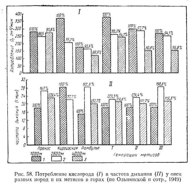 Потребление ксилорода и частота дыхания у овец разных пород и их метисов в горах
