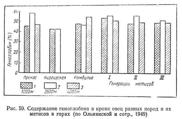 Содержание гемоглобина в крови овец разных пород и их метисов в горах