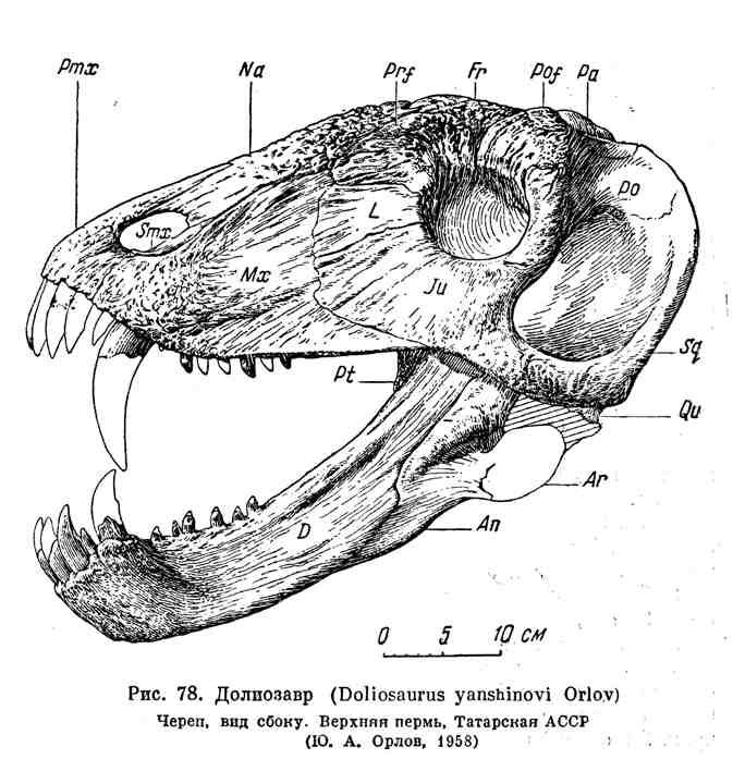 Долиозавр