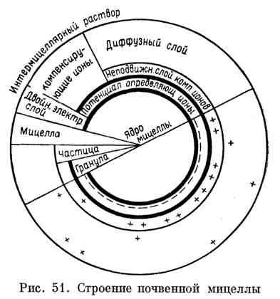 Строение почвенной мицеллы