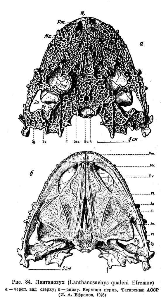 Лантанозух
