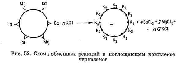 Схема обменных реакций в поглощающем комплексе чернозёмов