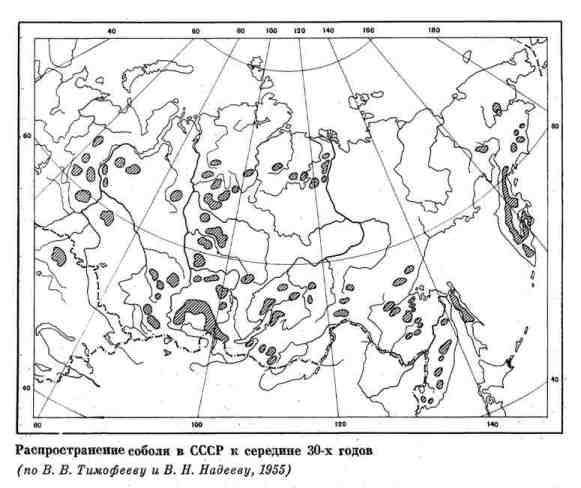 Распространение соболя в СССР к середине 30-х годов