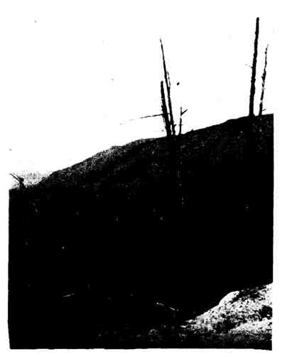 Эрозия после сведения леса