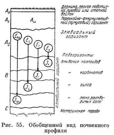 Обобщённый вид почвенного профиля