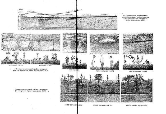 Схематический профиль типов почвообразования и связи с осадками и испаряемостью