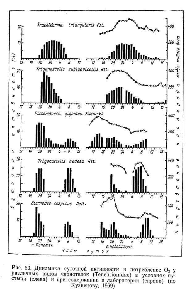 Динамика суточной активности и потребление кислорода у различных видов чернотелок в условиях пустыни и при содержании в лаборатории