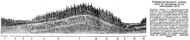 Почвенно-растительный профиль тайги