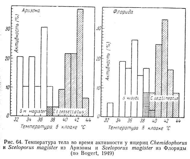 Температура тела во время активности у ящериц из Аризоны и из Флориды