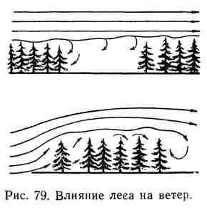 Влияние леса на ветер