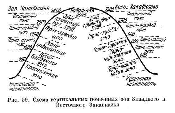 Схема вертикальных почвенных зон Западного и Восточного Закавказья