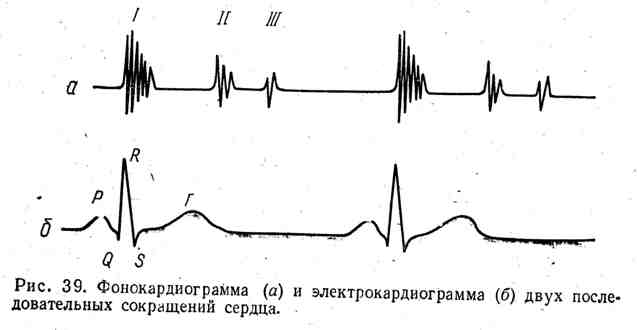 Фонокардиограмма и электрокардиограмма двух последовательных сокращений сердца